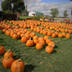 161026 VO Pumpkin